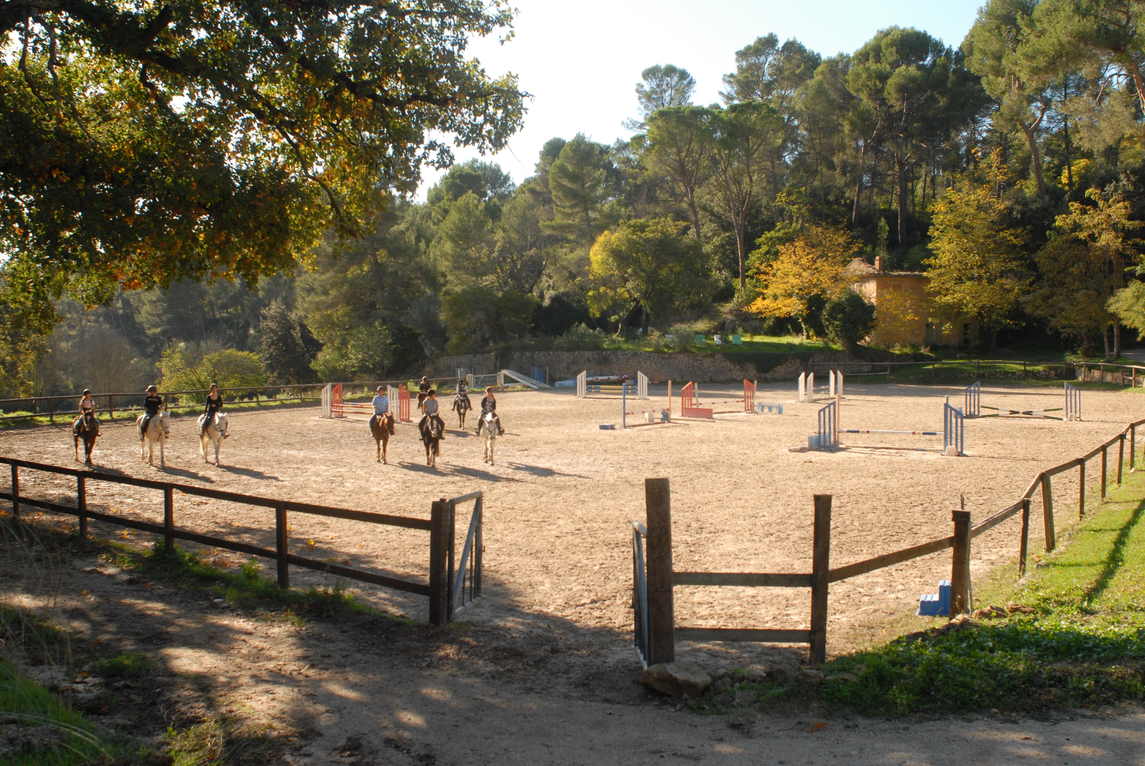 poneys et chevaux de club